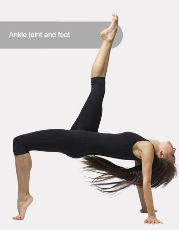Ankle joint and foot